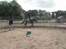 Horse Backing and Schooling